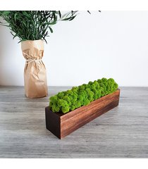 doniczka drewniana z chrobotkiem 30 cm, orzechowa