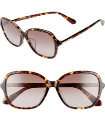 women's kate spade new york bryleefs 56mm round sunglasses - dark havana