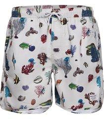 swim shorts coral reef badshorts creme dedicated