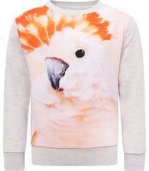 molo grey girl sweatshirt with colorful parrot