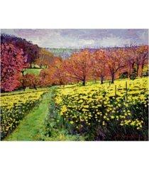 """david lloyd glover fields of golden daffodils canvas art - 20"""" x 25"""""""