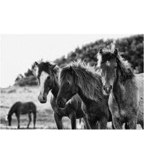 "aledanda horses three crop canvas art - 27"" x 33.5"""