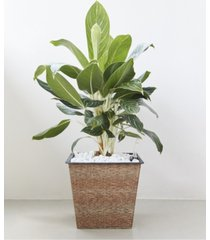 vifah hatteras thin square wicker smart self-watering planter