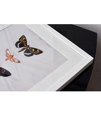 motyle - rycina - obraz w ramie 30x30