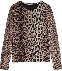 top wild leopard bruin