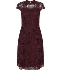 spetsklänning stripe stella dress