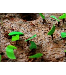 """dana brett munich tee cutter ants canvas art - 36.5"""" x 48"""""""