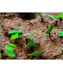 """dana brett munich tee cutter ants canvas art - 19.5"""" x 26"""""""