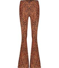 catwalk junkie broek tr golden leo bruin