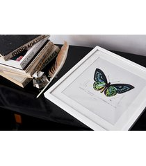 motyl - rycina - obraz w ramie 30x30