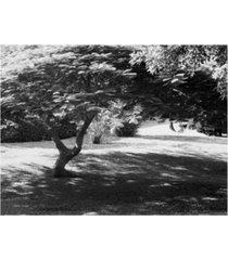 """monte nagler bermuda foliage bermuda canvas art - 37"""" x 49"""""""