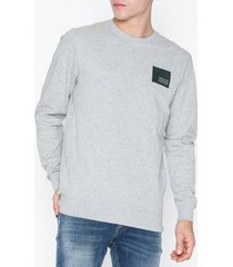 solid davidson ls crewneck sweat tröjor light grey
