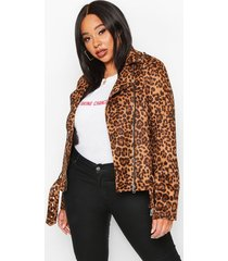 plus leopard suedette biker jacket, brown