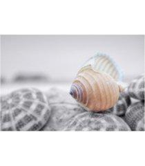 """alan blaustein crescent beach shells 15 canvas art - 27"""" x 33.5"""""""