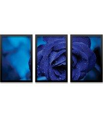 kit 3 quadros los quadros decorativos fotografia flor azul com moldura preta e vidro