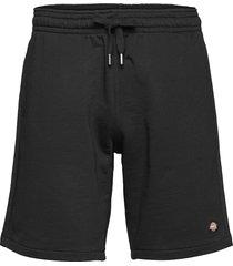 champlin shorts casual svart dickies