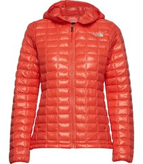 w thermoball eco hoo gevoerd jack oranje the north face