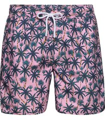 swim shorts beach palms badshorts rosa dedicated