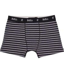 boxer gris biffa's fiji