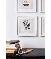 glistnik, ziele - rycina - obraz w ramie 30x30