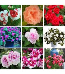 100 seed mixed colors double camellia impatiens seed (balsam / lady slipper