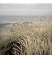 "alan blaustein tuscan dunes #2a canvas art - 15.5"" x 21"""
