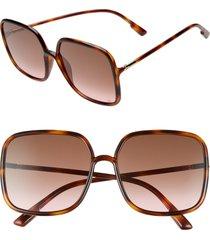 women's dior stellair 59mm square sunglasses - havana/ black brown green