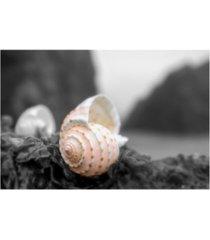 "alan blaustein cresent beach seashell #1a canvas art - 19.5"" x 26"""