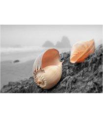 """alan blaustein crescent beach shells #20 canvas art - 27"""" x 33.5"""""""