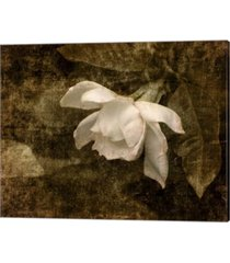 cape jasmine garden2 by jai johnson canvas art