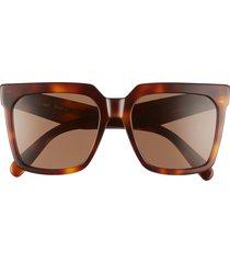women's celine 55mm polarized square sunglasses - blonde havana/ brown