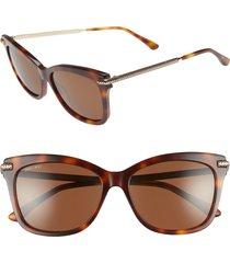 women's jimmy choo shade 55mm cat eye sunglasses - havana honey