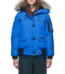 women's canada goose pbi chilliwack hooded down bomber jacket with genuine coyote fur trim, size large (10-12) - blue