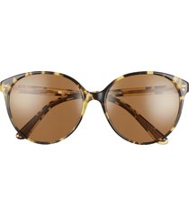 oliver peoples brooktree 58mm butterfly sunglasses in brown/brown polar at nordstrom