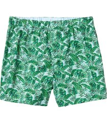 boxer palm leaf verde banana republic