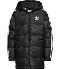 down jacket gevoerd jack zwart adidas originals