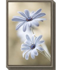 amanti art cape daisies by mandy disher canvas framed art