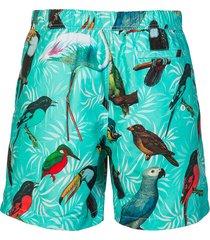 shiwi zwembroek birds mint bleu